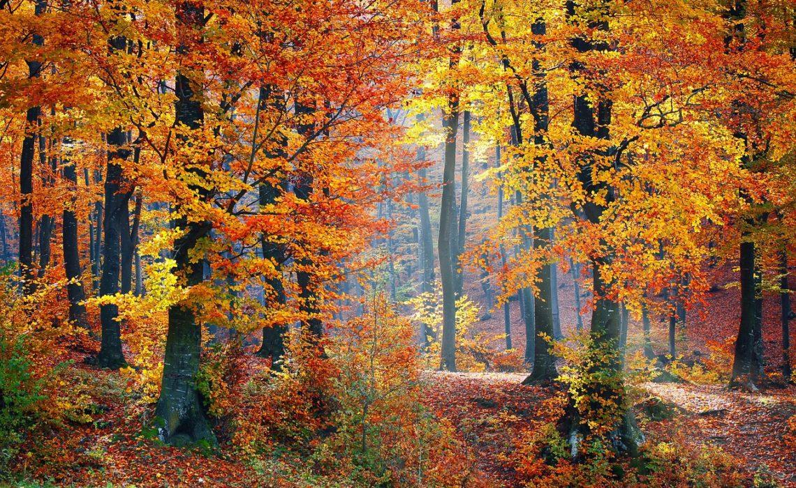 Forest bathing, czyli jak zrelaksować się w lesie