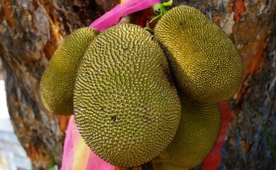 Dżakfrut - rewelacyjny owoc, który może zastąpić mięso
